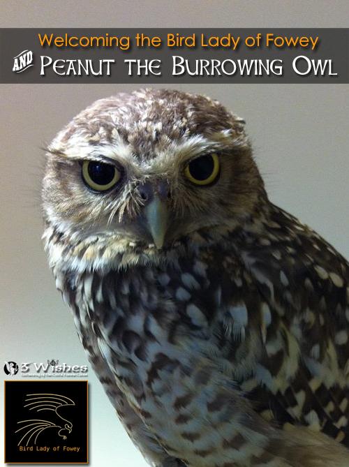 3WFF_2016_banner-slider-Peanut-owl